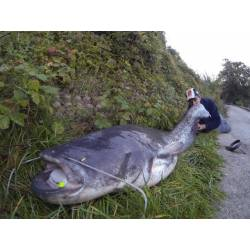 Delalande Agrafe Rapide Inox Speciale Exo Big Fish